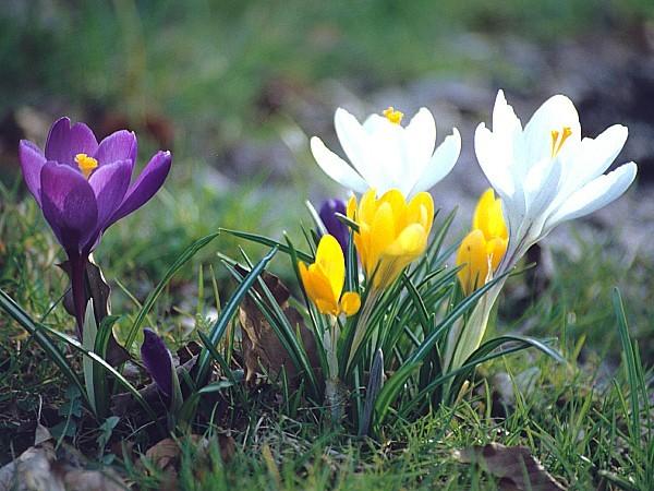 Frühlingsfit Symbolbild