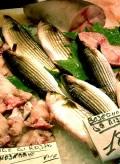 Jodspender Seefisch